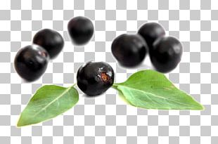 Dietary Supplement Berries Elderberry Antioxidant Superfood PNG