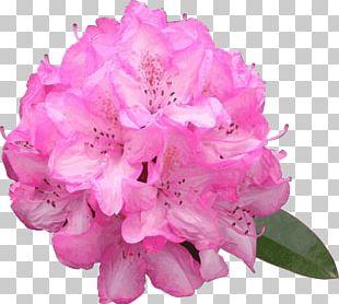 Azalea Drawing Flower Rhododendron Macrophyllum PNG
