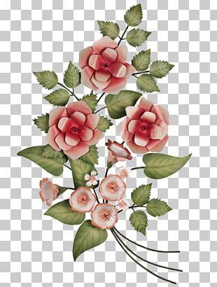 Garden Roses Centifolia Roses Cut Flowers Floral Design PNG