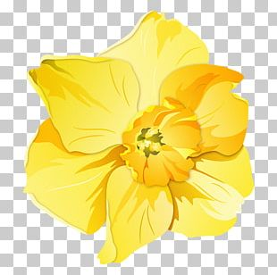 Daffodil Pin Badges T-shirt Zazzle Clothing Accessories PNG