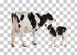 Holstein Friesian Cattle Heck Cattle Jersey Cattle Dairy Cattle Toggenburg Goat PNG