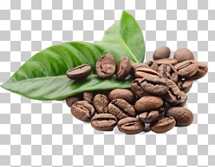 Arabica Coffee Espresso Kona Coffee Coffee Bean PNG