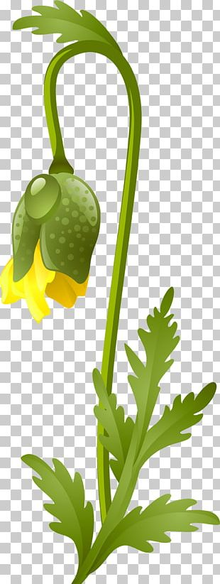 Flower Google S Leaf Vegetable PNG