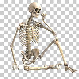 Human Skeleton Stock Photography Bone Skeletal Muscle PNG