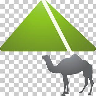 Camel Cartoon Icon PNG