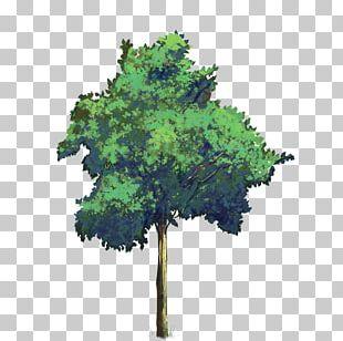 PicsArt Photo Studio Tree Structure PNG
