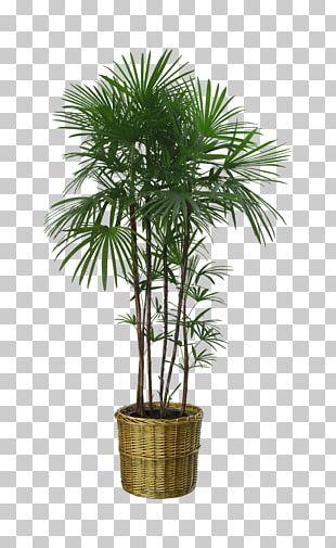 Flowerpot Houseplant Garden PNG