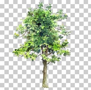 Tree Drawing Watercolor Painting Architecture PNG