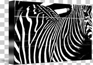 Zebra Brand Photography PNG