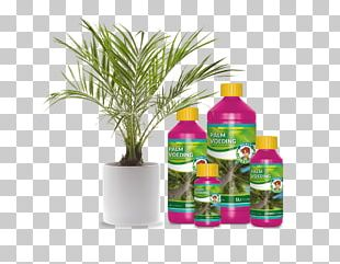 Sago Palm Houseplant Garden Tree Bonsai PNG