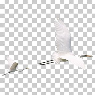Beak Water Bird Crane Egret PNG