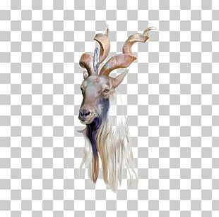 Goat Drawing Art Illustrator Illustration PNG