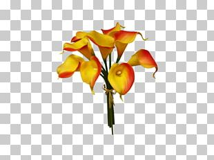 Arum-lily Cut Flowers Floral Design Plant PNG