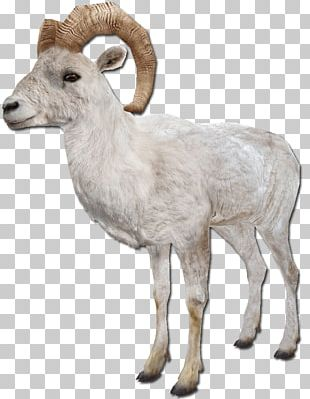 Barbary Sheep Argali Goat Farm Animals: Sheep PNG