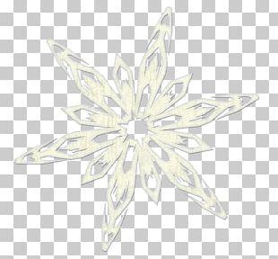 Symmetry White Flower Pattern PNG