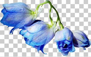 Blue Rose Cut Flowers Garden Roses PNG