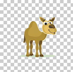 Camel Cartoon PNG