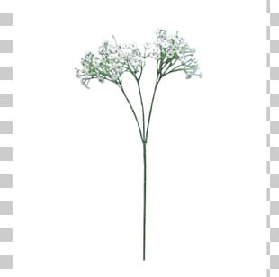 Flower Bouquet Baby's-breath Plant Stem Cut Flowers PNG