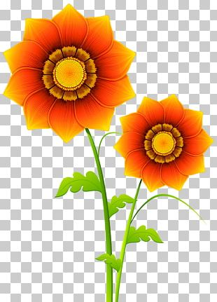 Skeleton Flower Stock Photography PNG