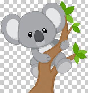 Baby Koala Billabong Zoo Bear PNG