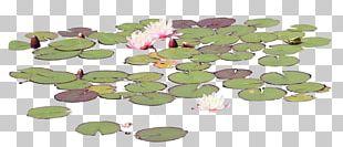 Petal Leaf Flower Organism PNG