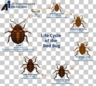 Bed Bug Control Techniques Bed Bug Bite The Bedbug Biological Life Cycle PNG