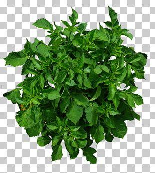 Shrub Tree Plant PNG