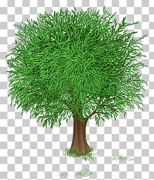 Tree Green Branch PNG