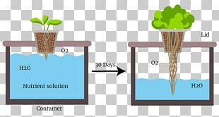 Passive Hydroponics Deep Water Culture Gardening Organic Hydroponics PNG