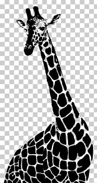 Drawing Northern Giraffe Monochrome Photography Illustration PNG