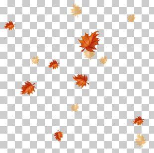 Autumn Leaves Maple Leaf Petal PNG