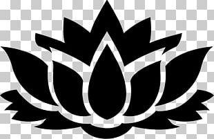 Nelumbo Nucifera Flower Water Lily PNG