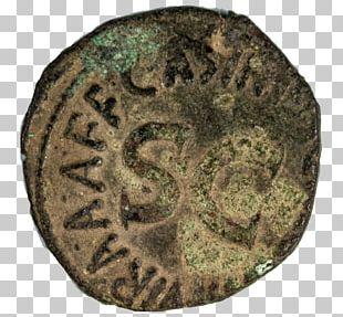 Coin Bronze Organism PNG