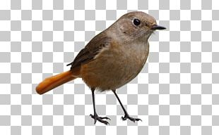 Bird Icon PNG