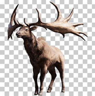 Moose PNG
