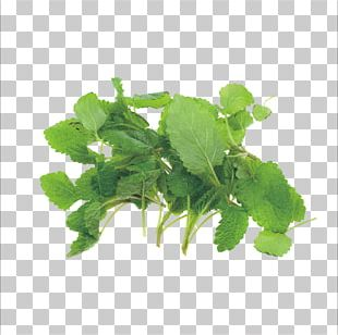 Herb Italian Cuisine Mint Stock Spice PNG