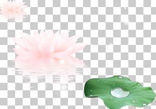 Leaf Guyu PNG