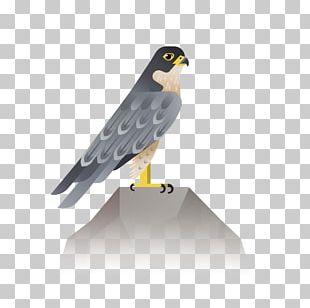 Bird Eagle Hawk Icon PNG