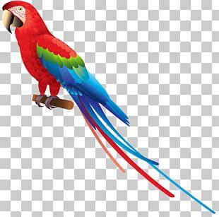 Bird True Parrot Amazon Parrot PNG
