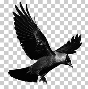 Crows Flight PNG
