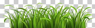 Landscape Cartoon Lawn PNG
