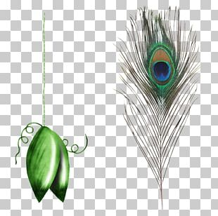 Feather Peafowl Eyespot Simple Eye In Invertebrates PNG
