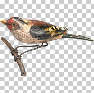 Bird Finch Wren Beak Fauna PNG