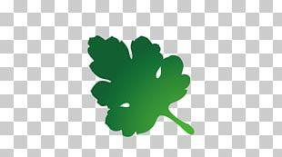 Leaf Tree Euclidean PNG
