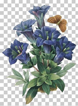 Botanical Illustration Flower Floral Design Art PNG