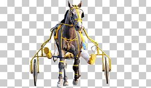 Horse Harnesses Bridle Harness Racing Horse Racing PNG