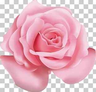 Beach Rose Pink Flower Icon PNG