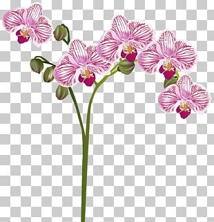 Orchids Flower PNG