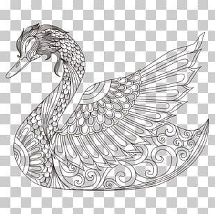 Cygnini Bird Coloring Book Drawing PNG