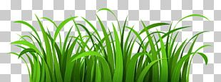 Presentation Grass Cartoon PNG